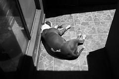 (Ivn Rubn) Tags: light shadow bw dog luz monochrome contrast sleep shapes places sombra bn perro textures lugares rincones contraste instant gloom formas intimate dormir contemplative texturas contemplation corners instante penumbra monocromtico ntimo contemplacin contemplativo