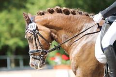 IMG_2452 (dreiwn) Tags: horse pony horseshow pferde pferd equestrian horseback reiten horseriding showjumping dressage reitturnier dressur reitsport dressyr ilsfeld dressuur ridingclub junioren ridingarena pferdesport springreiten reitplatz reitverein dressurreiten dressurpferd dressurprfung tamronsp70200f28divcusd jugentturnier