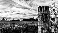 7DM23617-Edit (VNR Photography) Tags: old trees sky blackandwhite bw ontario canada tree monochrome clouds canon fence countryside afternoon farm country canadian countryroad fenceline oldfence caledon vnr andrevonnickisch vnrphotography avnrphotogmailcom httpswwwfacebookcomavnrphotographyrefhl canonbringit