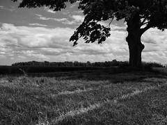 WALKING (jumpinjimmyjava) Tags: summer tree field clouds rural landscape farm calming peaceful lane