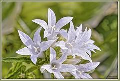 _JVA7666_DxO (mrjean.eu) Tags: park pink blue white france flower macro fleur rose yellow fleurs jaune garden rouge nikon jardin vert bleu botanic lorraine botanique parc metz 105mmf28 flowerws grteen