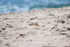 Crab (JennaAbbottPhotography) Tags: beach sand funny crab