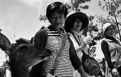 Nara Park, Japan. 2016 (Mambo Ferido) Tags: blackandwhite film 35mm kodak trix streetphotography photojournalism streetphoto filmgrain blackandwhitestreet filmfeed leicastreet believeinfilm photodocumentray pushthatfilm