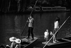 Canal Life, Cambridge (Edmond Terakopian) Tags: cambridge blackandwhite tourism monochrome canal swan cygnet streetphotography tourist monochrom dailylife punting punt