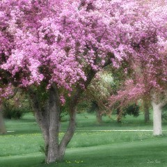 Spring Beauty (DigiDi) Tags: trees spring blossoms hypothetical theworldwelivein imagepoetry contemporaryartsociety fantasticnature alberoefoglia digidi diamondclassphotographer flickrdiamond memoriesbook theawardtree saariysqualitypictures magicunicornverybest artcityart
