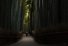 Japan - Bamboo forest (sadaiche (Peter Franc)) Tags: japan night kyoto bambooforest