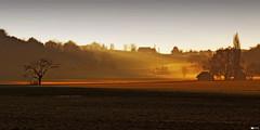 Rural Idyll (Daniel Wildi Photography) Tags: light sun rural switzerland countryside country idyll 2012 ruralarea gürbetal cantonofbern featuredonadidapcom danielwildiphotography gürbevalley
