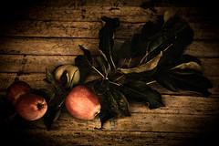 leaves,  apples (Steven Schnoor) Tags: red stilllife color green art nature fruit flora colorful apples vignette tabletop schnoor simplelogic jimsbackyard sept2011