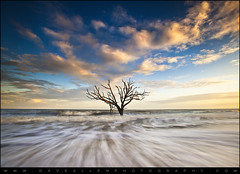 Botany Bay Edisto Island, Charleston SC - Alone (Dave Allen Photography) Tags: ocean longexposure blue trees sunset sky seascape tree beach sc water dave landscape outdoors island one evening coast landscapes movement oak exposure waves alone allen seascapes action south horizon fineart southcarolina professional adventure coastal filter single nd carolina prints weathered remote bone flowing oaktree seashore boneyard daveallen edisto shutterspeed edistoisland seawater gradnd acebasin boneyardbeach mygearandme mygearandmepremium mygearandmebronze mygearandmesilver mygearandmegold mygearandmeplatinum mygearandmediamond tplringexcellence
