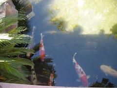 DSCN1277 (jblueafterglow) Tags: usa fish animals lasvegas nevada 2011 flamingohotelandcasino lasvegasnevadausa june2011