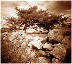 Windblown (wheehamx) Tags: camera west lens angle wide plastic homemade ayrshire kilbride