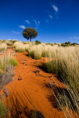 Lemonade (Universal Stopping Point) Tags: sky tree sand colorful alone loneliness desert hill australia outback lonely wispy northernterritory