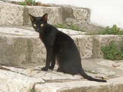 Black cat (Irene Grassi (sun sand & sea)) Tags: italy cats animals cat italia basilicata scala gatto nero animali gattonero ripacandida