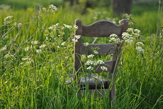 Peace & Quiet (HannyB) Tags: flowers grass interestingness spring weeds chair quiet peace 100v10f cushion oegstgeest woodenchair 30faves30comments300views
