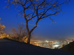 IMG_0661 (Tarun Chopra) Tags: tree night gurgaon haridwar s100 riverganga mansadevitemple canonpowershots100