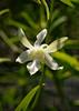 Orchids, Papua New Guinea (Eric Lafforgue) Tags: culture tradition tribal tribetribu oceanie papuanewguinea papouasienouvelleguinee png oceania island fleur flower png5704 巴布亞紐幾內亞 巴布亚纽几内亚 巴布亞新幾內亞 巴布亚新几内亚 paapuauusguinea papoeanieuwguinea παπούανέαγουινέα papouasienouvelleguinée papuaneuguinea ปาปัวนิวกินี papuanovaguiné papuásianovaguiné papuanováguinea папуановагвинеја папуановагвинея папуановаягвинея papuanowagwinea papúanuevaguinea papuanugini papuaniugini papuanuovaguinea papuanyaguinea papuanyguinea 파푸아뉴기니 パプアニューギニア