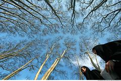 264 - Look up! (Ata Foto Grup) Tags: blue trees sky woman cloud tree face up look scarf turkey dark women faces muslim islam rip türkiye hijab dal down istanbul lookup conservative turban mavi yüz bulut gökyüzü siyah yüzler karanlık carsaf yukarı gülhane aşağıdan tutucu yukarıbak