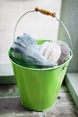 GreenBucket (srlh627) Tags: shells green beach bucket beachbucket sliderssunday