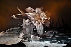 Faded Beauty (keeva999) Tags: flowers stilllife texture garden nikon lily iowa chasingdreams jessicadrossin d3100