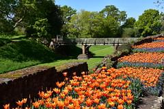 Sunny Spring (John A King) Tags: flowers spring tulips sunny palace eltham englishheritage