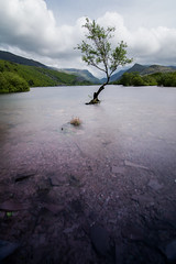 Lonely Tree (^hanky1984^) Tags: longexposure lake mountains tree water wales landscape nikon cymru tokina llanberis snowdonia lonelytree srb 1116 10stop nd1000 nikonpictures visitwales 10stopndfilter 10stopnd d5200 tokina1116mm tokina1116 10stopfilter srbgriturn nikond5200 srbphotographic llanberistree