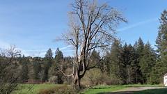 20160331_091012 (ks_bluechip) Tags: creek evans trails preserve sammamish usa2106