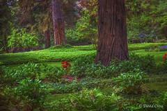 Verdure (buffdawgus) Tags: california northerncalifornia garden landscape spring lush springtime verdure grassvalley nevadacounty empireminestatepark sierranevadafoothills empiremine canonef24105mmf4lisusm canon5dmarkiii lightroom5 topazsw