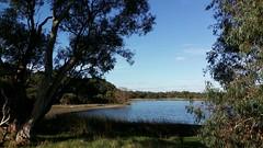 vista (ClareSnow) Tags: autumn lake water australia naturereserve perth eucalyptus gumtree waterlevel eucalyptusrudis floodedgum lakegwelup lakegwelupreserve