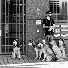 The Pack (Akbar Simonse) Tags: street people bw man holland blancoynegro dogs netherlands monochrome sunglasses amsterdam square beard rotterdam zwartwit candid nederland streetphotography huskies shades bn tattoos pack straat zonnebril honden baard vierkant straatfotografie straatfoto roedel dscn2250 tatoeages