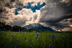 _MG_7592 (TobiasW.) Tags: blue mountain field weather clouds feld wolken blau wetter cornflowers wolkenstimmung wechselhaftes cornflowerfield kronblumen kronblumenfeld