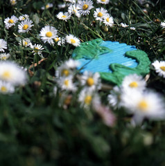 Day 105/365 - Earth-ish Day (Great Beyond) Tags: flowers flower grass globe earthday planetearth 80mm arborday fujichromeprovia100f mamiyasekor mamiyac330professional cookiee