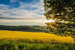 IMG_1904_5_6_fused-2 (Andr Leonhardt) Tags: trees sunset nature beauty clouds landscape deutschland abend heaven sonnenuntergang natur himmel wolken landschaft bume raps hdr erzgebirge
