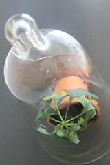 Theres life inside (lenabirgitta) Tags: flower glass flowerpot glas fotosondag fs160529