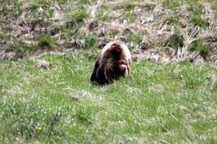 banff jun 2016 (vipermikey) Tags: canada rockies alberta banff banffnationalpark