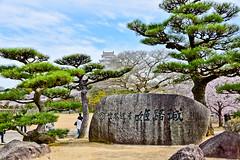 -  (Vince-leo) Tags: plant japan cherry spring   sakura cherryblossoms kansai          himejij