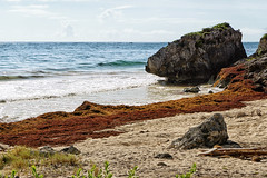 MEXICO - Tulum - Quintana Roo (Infinita Highway!) Tags: trip travel praia beach nature america mexico highway sony central playa viagem alpha infinita spiagia