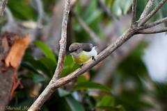 IMG_6932L4 (Sharad Medhavi) Tags: bird canonef100400mmf4556lisusm canoneod50d birdsandbeesoflakeshorehomes