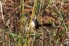 IMG_7166L4 (Sharad Medhavi) Tags: bird canoneod50d birdsandbeesoflakeshorehomes
