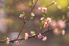 New-Born (Jon Medina) Tags: life new flowers trees light sun nature leaves spring sony again alpha a35