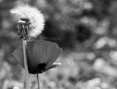 (hadeel badwi) Tags: photography flickr syria   badwi   hadeel  canon550d