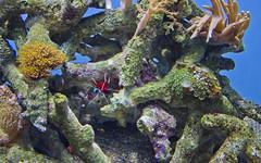 Monterey Bay Aquarium (mozerati2008) Tags: aquarium monterey carmel lonecypress sevengables oceanview asilomarstatebeach juliapfeiffer greengable