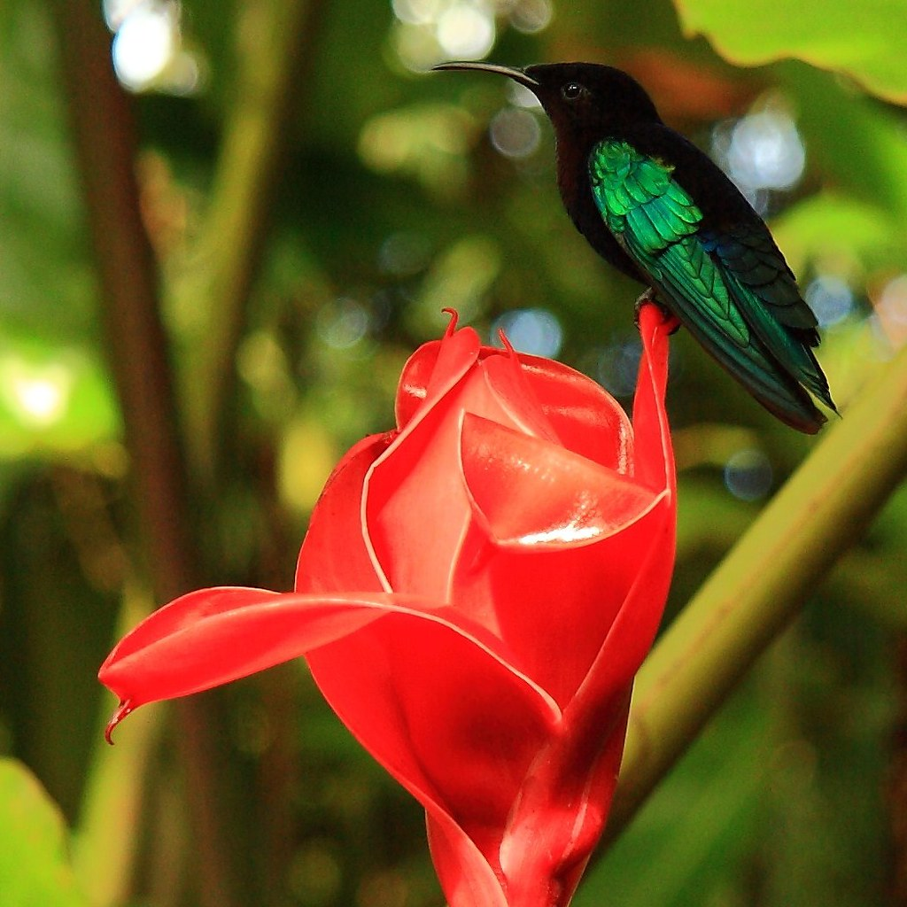 The World S Best Photos Of Exotique And Martinique Flickr Hive Mind