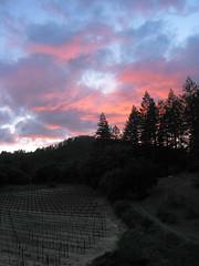 vineyard sunset above Calistoga (cyprest) Tags: california sunset silhouette clouds vineyard calistoga winecountry naturepoetry