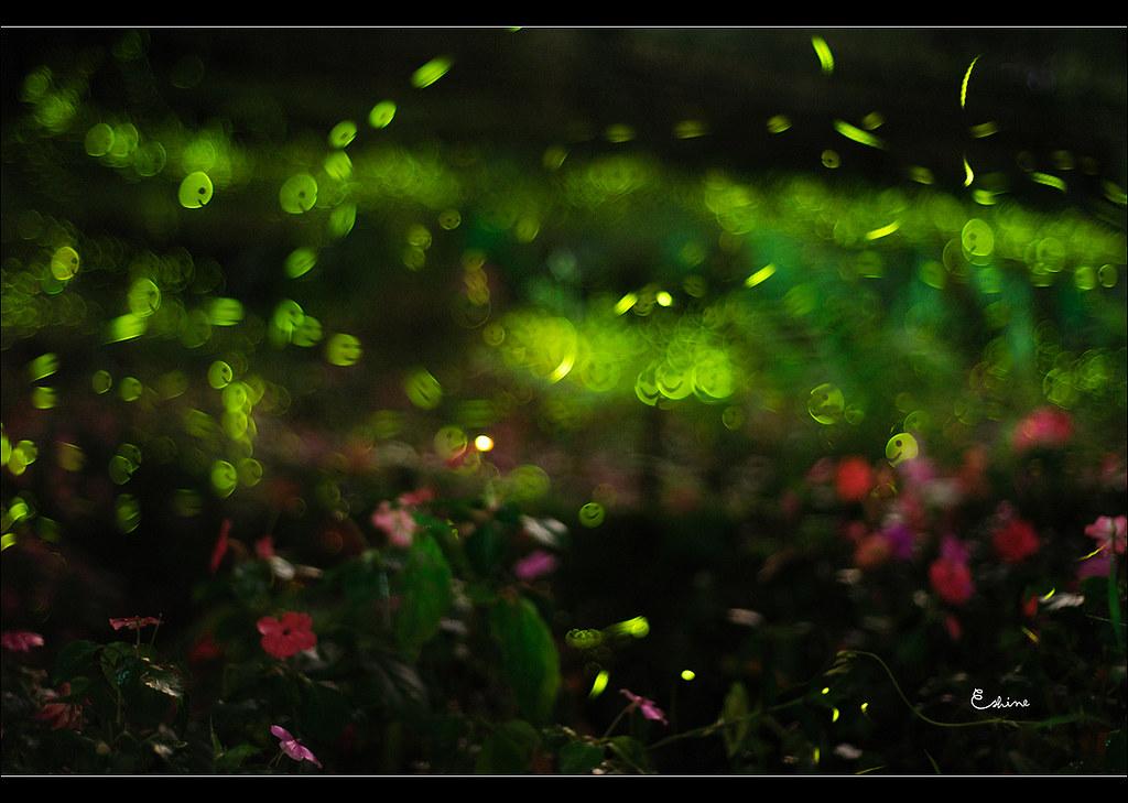 http://farm8.static.flickr.com/7099/7138929401_3dbba3b8cd_b.jpg