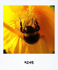 """#DailyPolaroid of 2-6-12 #248 • <a style=""""font-size:0.8em;"""" href=""""http://www.flickr.com/photos/47939785@N05/7157734771/"""" target=""""_blank"""">View on Flickr</a>"""