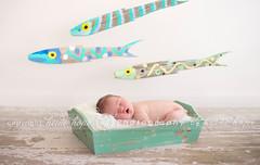 One Fish, Two Fish, Three Fish FOUR! (Heidi Hope) Tags: boy newborn familyphotographer newbornboy babyphotographer newbornphotographer heidihopephotography heidihope httpwwwheidihopecom riphotographer