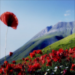 the charm of nature (s@brina) Tags: color nature poppies landescape umbria castelluccio montevettore saariysqualitypictures