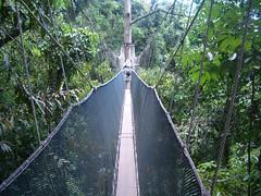 <マイバス>世界遺産キナバル公園散策とキャノピーウォーク