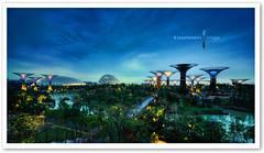 Singapore - Gardens by the Bay (TOONMAN_blchin) Tags: singapore marinabay thegalaxy gardensbythebay toonman mygearandme mygearandmepremium mygearandmebronze mygearandmesilver mygearandmegold ringexcellence 滨海湾花园