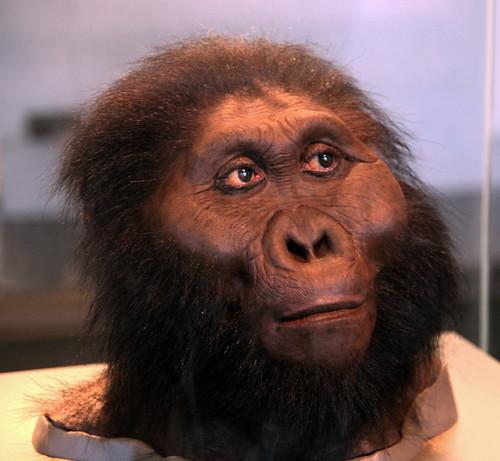 Paranthropus boisei adult male - head model - Smithsonian Museum of Natural ...